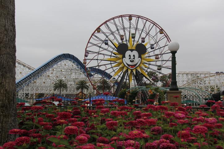 Fotos da Disney em Orlando Disney World em Orlando e