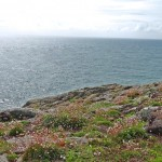 Skomer: reserva ecológica no País de Gales