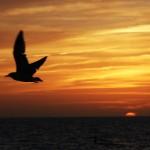 Sunset Beach em Treasure Island na Flórida