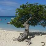 Planejando a Viagem para Aruba no Caribe
