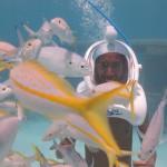 Roteiro de 5 dias em Aruba