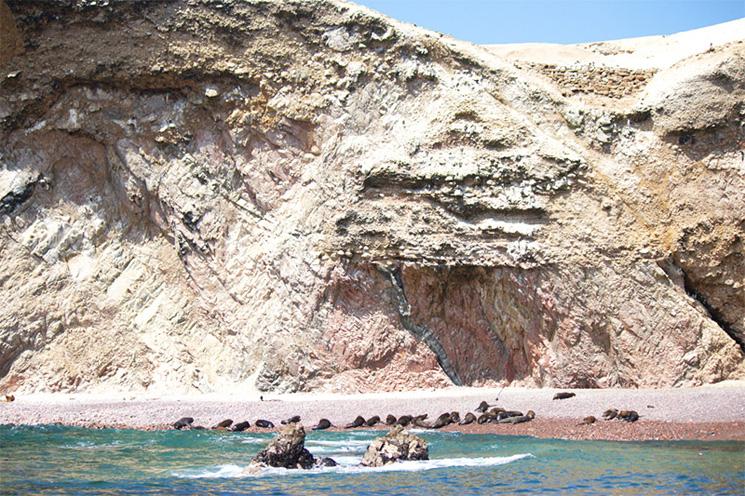 paracas_adv_lobos_marinhos
