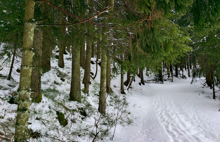 floresta negra (7)