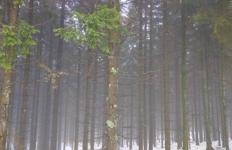 floresta negra (8)