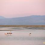 Deserto do Atacama: tudo que você precisa saber pra viajar pra esse destino no Chile