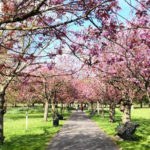 Primavera em Londres 2016
