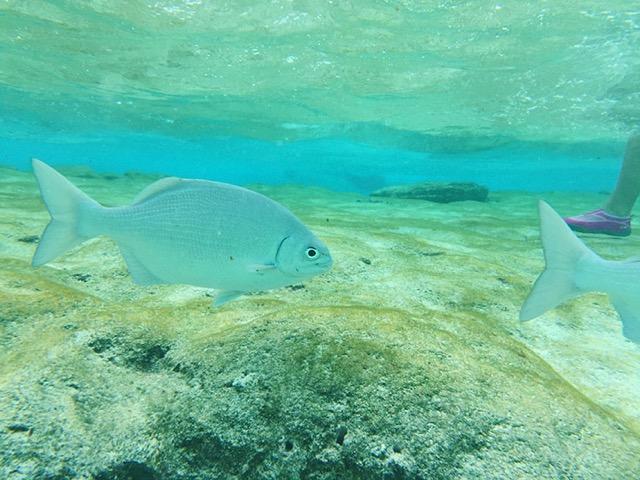 San-Andres-acuario