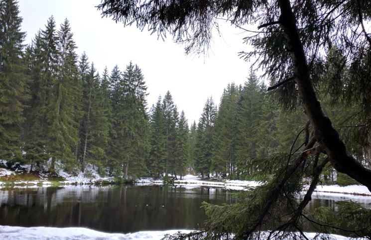 roteiro na floresta negra (15)