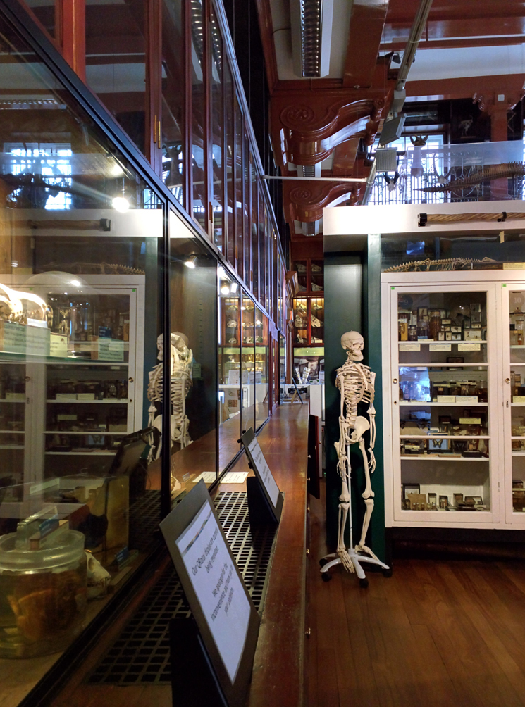 Grant Museum of Zoology (3)