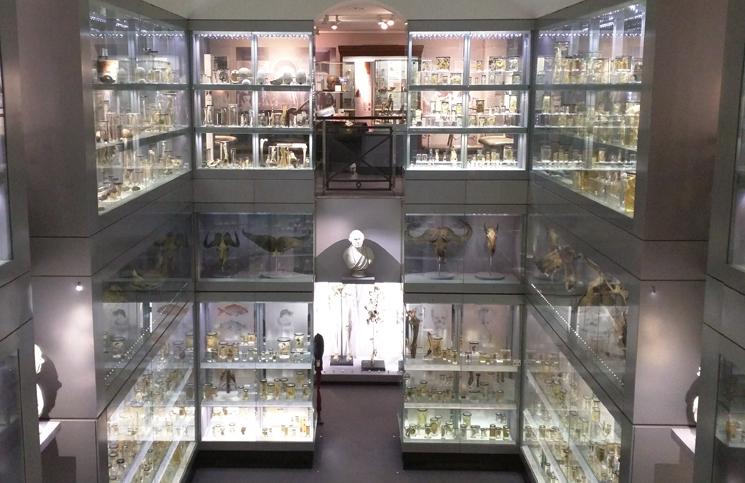 Hunterian Museum (1)