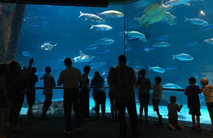 aquarioneworleans