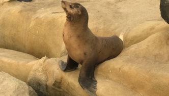 La Jolla Cove em San Diego: A praia das focas e leões marinhos