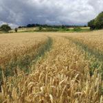 Hiking na Inglaterra: caminhando pela trilha circular de Tring